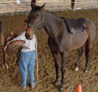 "Nancy offering the saddle for her horse to explore prior to ""saddling like a partner."""