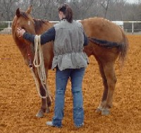 "Debbie teaching her horse how to ""Smell it's tail"""